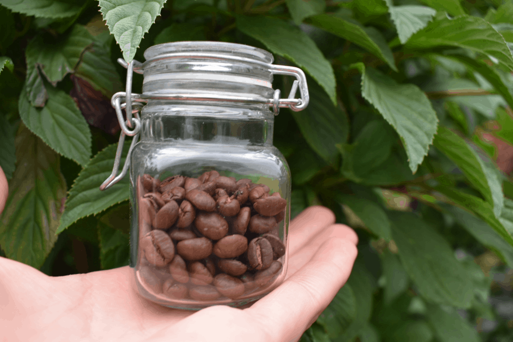 Glass container with coffee beans inside