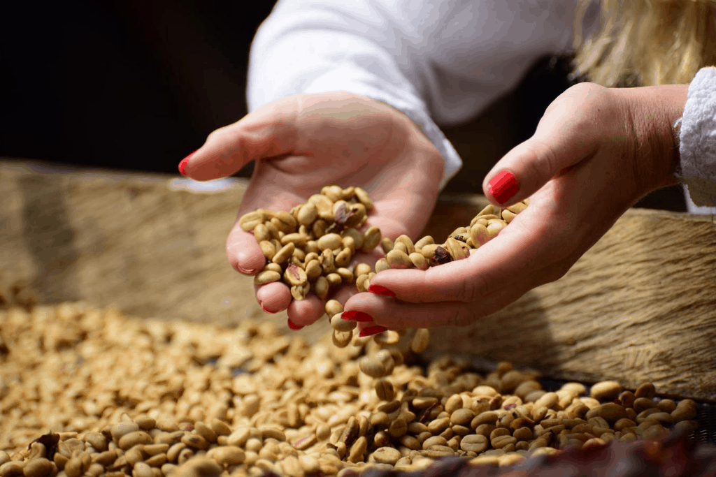 Coffee beans getting processed