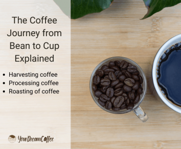 The Coffee Journey from Bean to Cup Explained